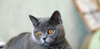 ile kosztuje sterylizacja kotki